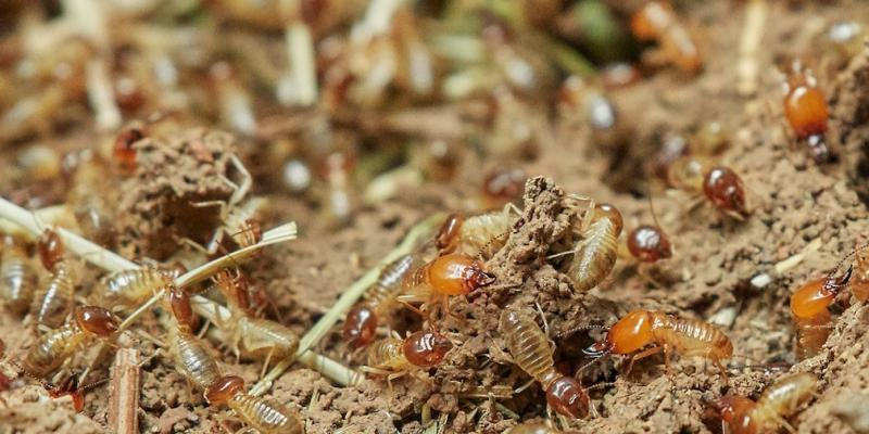 Termites crawling on the ground